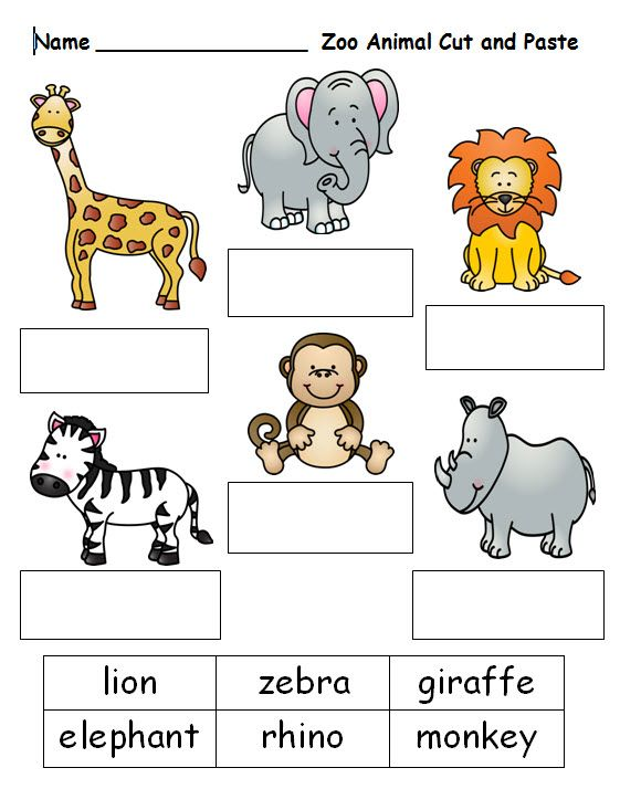 Zoo Animals Worksheet Worksheets For All