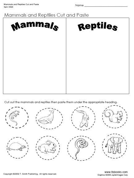 31 Best Unit Ideas  Mammals Images On Free Worksheets Samples