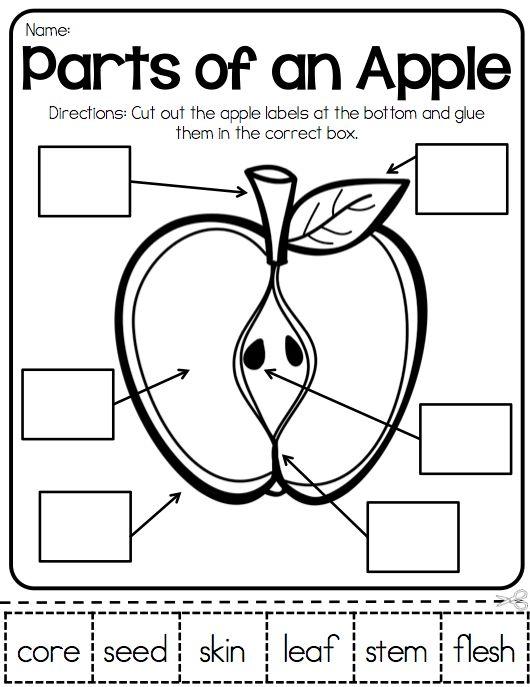 36 Best Apples Images On Free Worksheets Samples