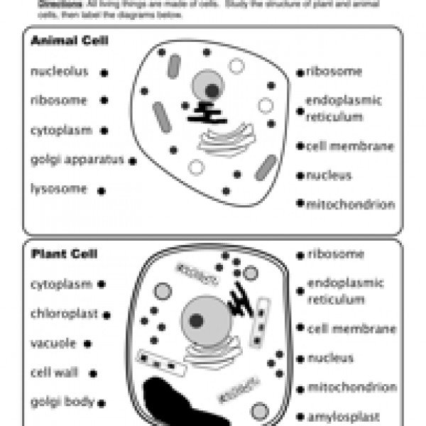 4th Grade Worksheets On Plant And Animal Cells