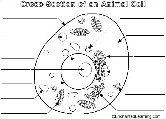 Animal cell diagram blank worksheets free worksheets samples ccuart Gallery