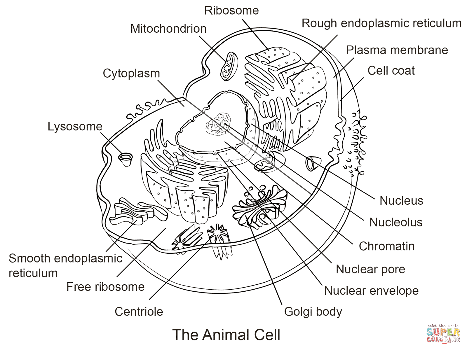 Animal Cell Coloring Sheet The Best Worksheets Image Collection