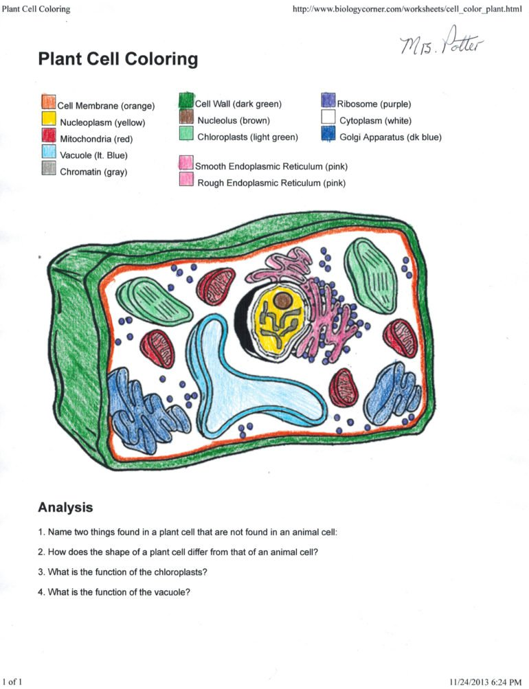 Animal Cell Coloring Worksheet Inspiration Graphic Also Pl On The