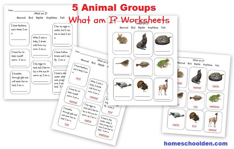 Animals And Their Characteristics (free Worksheet)