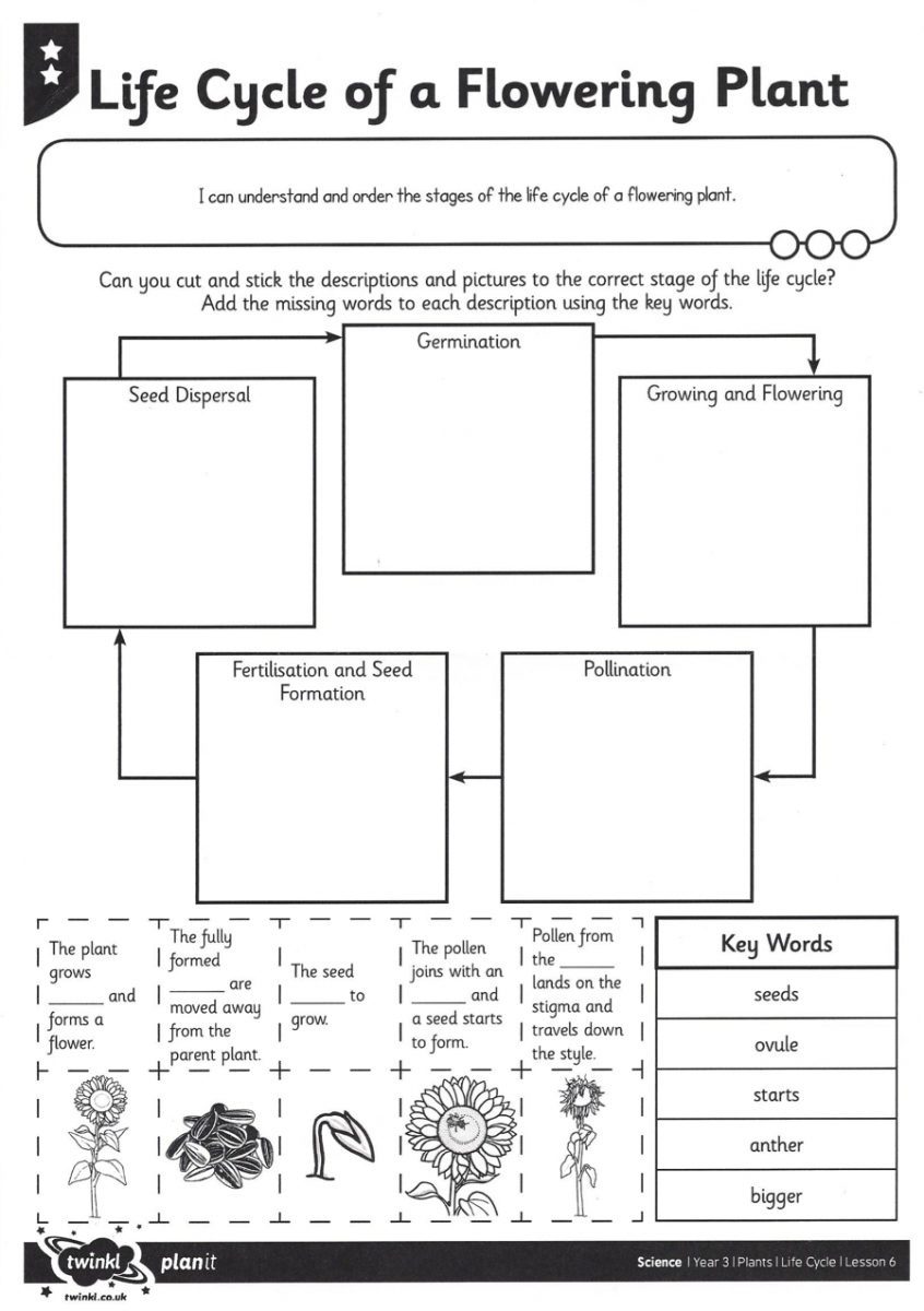 Best Solutions Of Plant Life Cycle Worksheets Also Job Summary