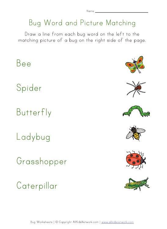 Bugs Worksheet Matching