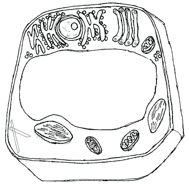 Cell Coloring Page Plant Cell Coloring Sheet Key Animal Cell