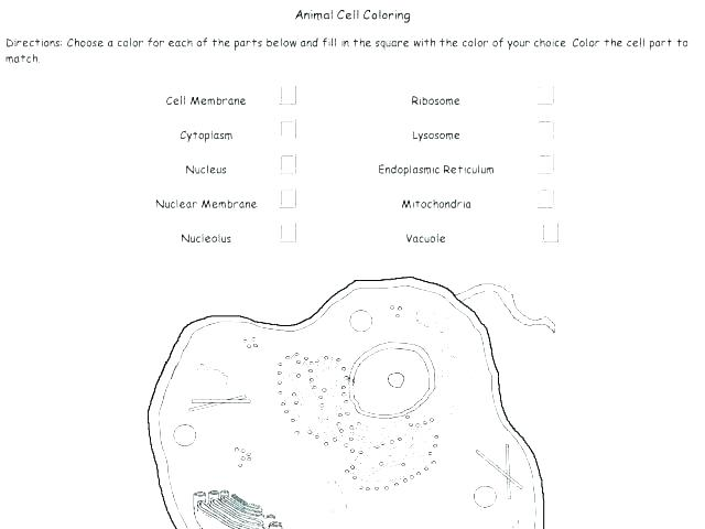 Cell Membrane Coloring Worksheets Biology Junction Answers