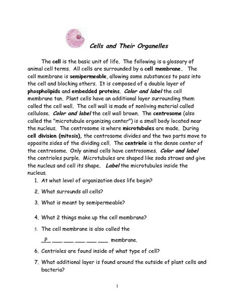 Cell Organelle Worksheet Answers Worksheets For All