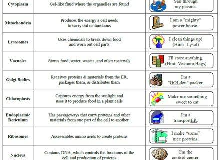 Cell Organelles Worksheet Cell Organelle Research Worksheet