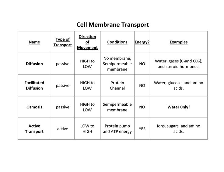 Cell Transport Worksheet Answers  Lesupercoin Printables Worksheets