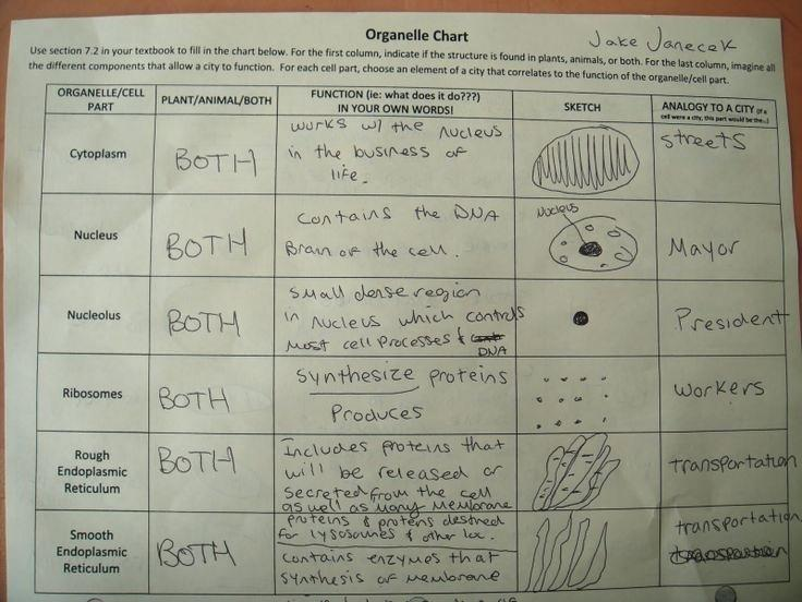 Cells And Their Organelles Worksheet Answers As Well As 3 Cell