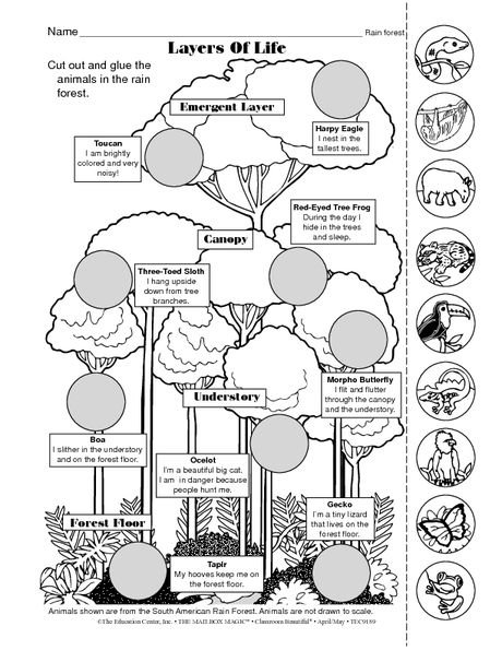 Collection Of Solutions Rainforest Worksheets With Template Sample