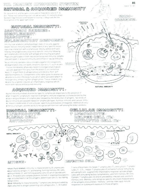 Coloring Sheet Quiz Cell Membrane Coloring Worksheet Biology