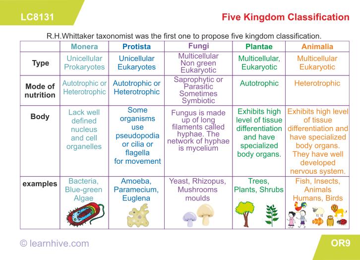 Confortable Biology Worksheets Animal Kingdom On Learning Card For