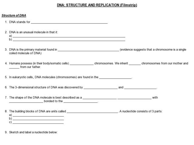 Dna Replication Activity Worksheet Worksheets For All