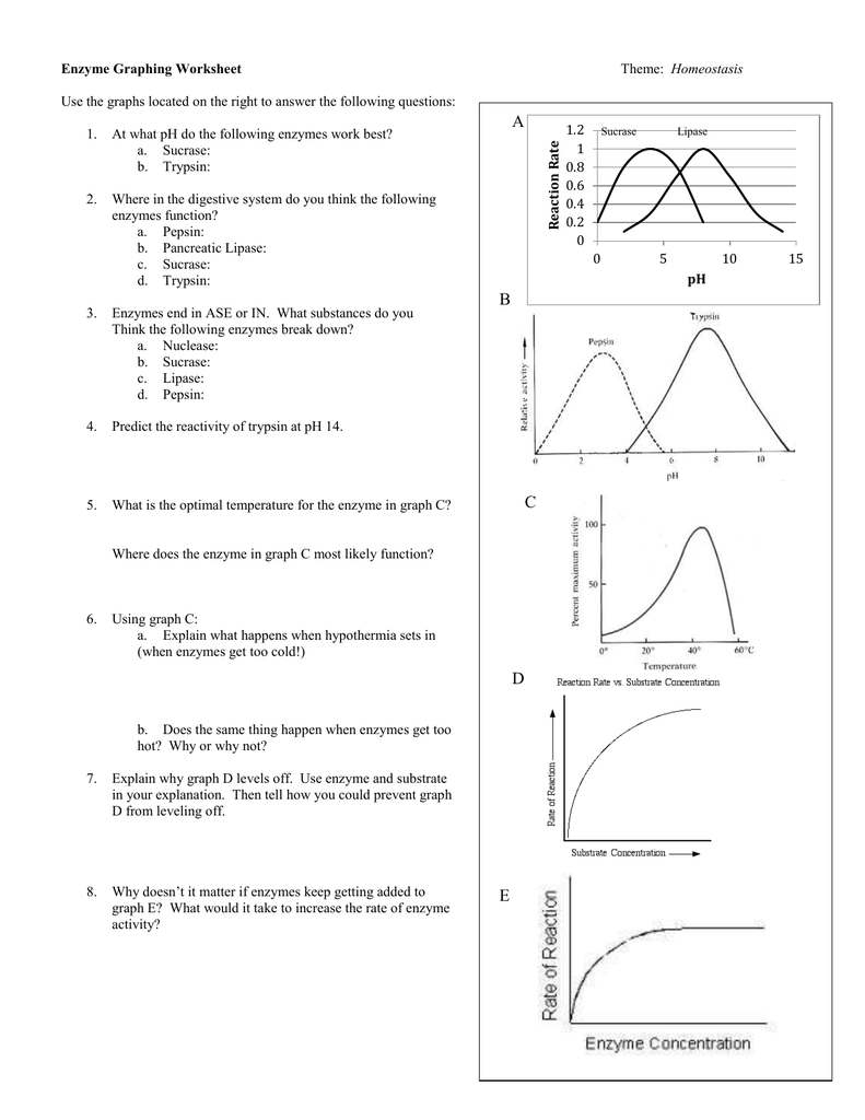 Enzyme Worksheet The Best Worksheets Image Collection