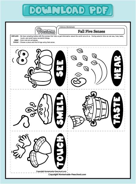 Five Sense Worksheet  New 338 Five Senses Worksheets For Middle School