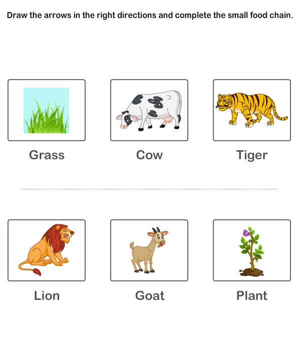 Food Chain Worksheet Worksheets For All