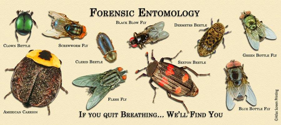 Forensic Entomology Worksheet The Best Worksheets Image Collection