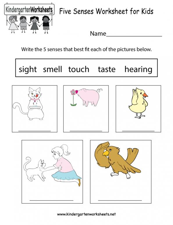 Free Kindergarten Science Worksheets Learning The Basics Of Easy