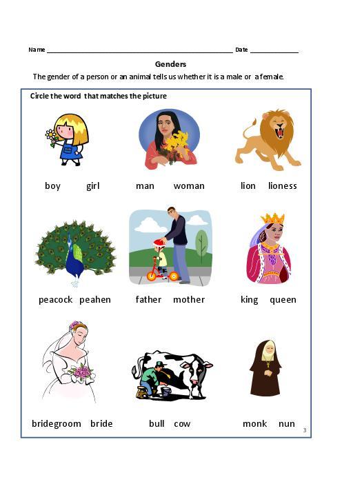 Genders Of Nouns