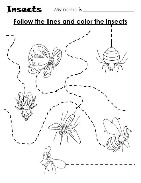 Insects Trace Worksheet