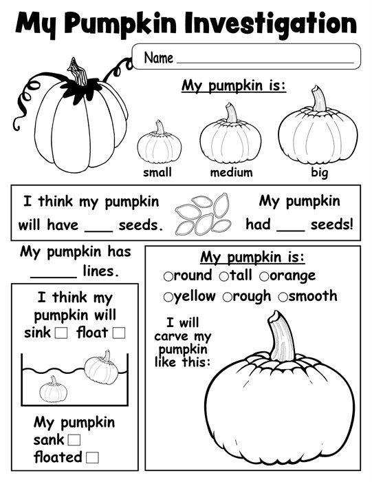 Kindergarten Pumpkin Worksheets Pumpkin Investigation Worksheet