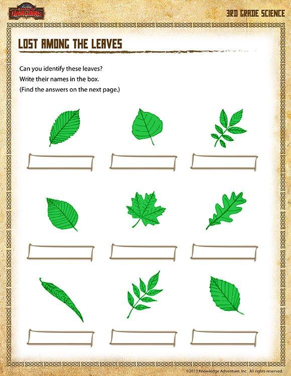 Leaf Identification Worksheet Worksheets For All