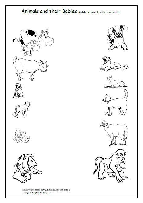 Mammals Wild Animal Best Blog  Pet And Wild Animals Worksheet