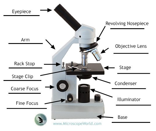 Microscope World Blog  Labeling The Parts Of The Microscope