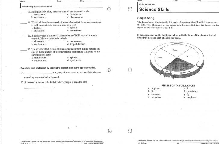 Mitosis Worksheet And Diagram Identification Photo