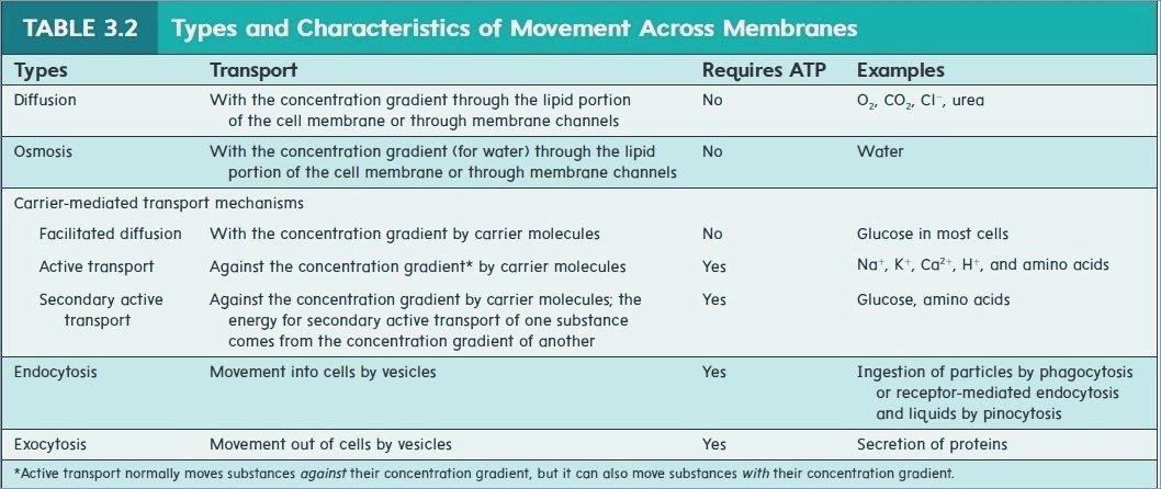 Movement Across The Cell Membrane Membrane Transport Movement
