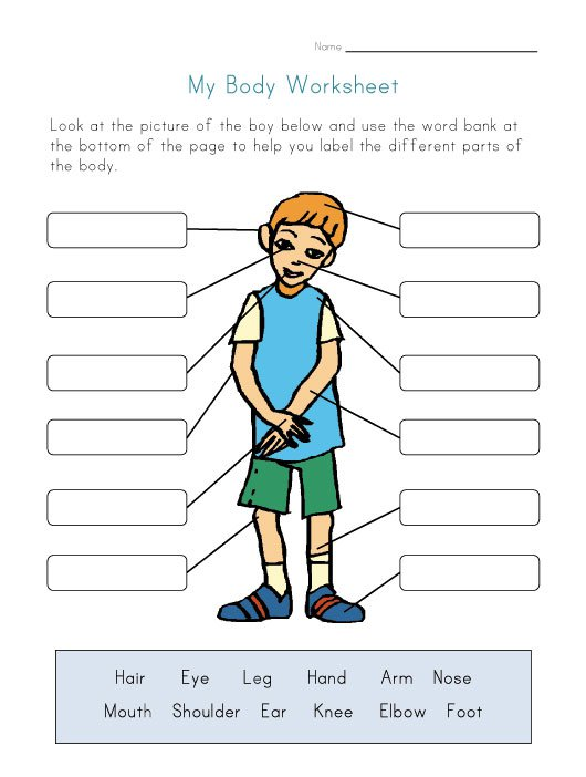 Naming Parts Of The Body Worksheet