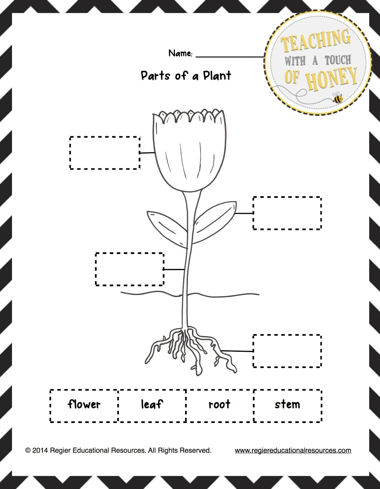 Part Of Plants Worksheet Worksheets For All