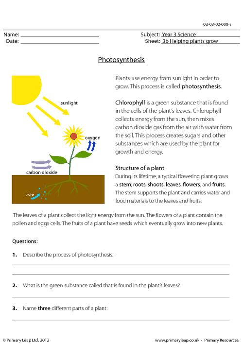 Photosynthesis Worksheets For Kids Worksheets For All