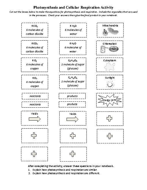 Photosynthesis Worksheets Middle School Worksheets For All