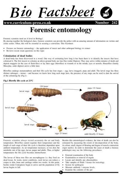 forensic entomology worksheets. Black Bedroom Furniture Sets. Home Design Ideas