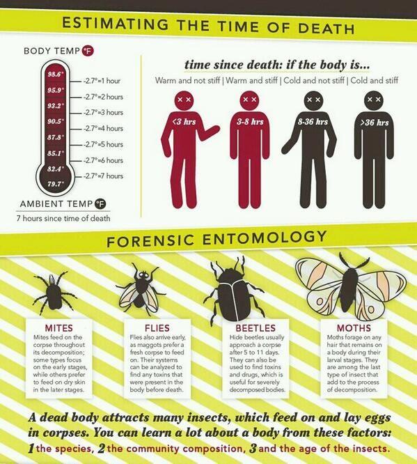 Printables  Forensic Entomology Worksheet  Messygracebook