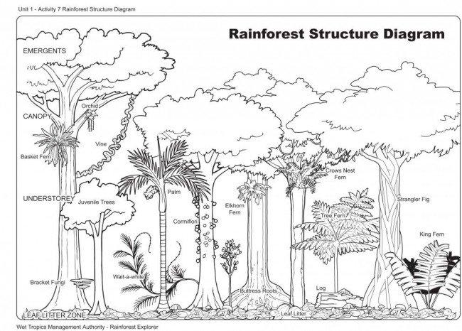 Rainforest Worksheets For Kids Worksheets For All