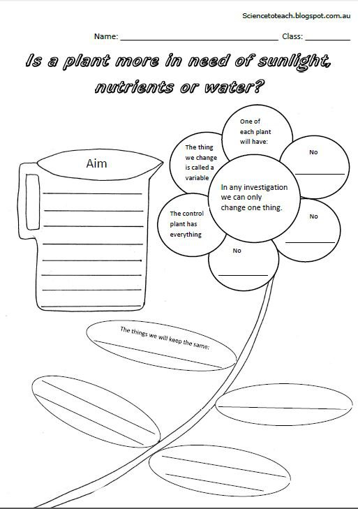 Science To Teach  Worksheets To Complete The Unit On Plants For