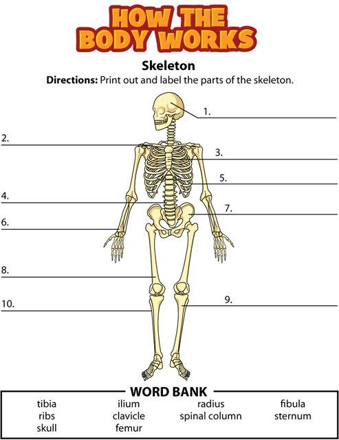 Skeletal System Interactive Best 25 Skeletal System Activities