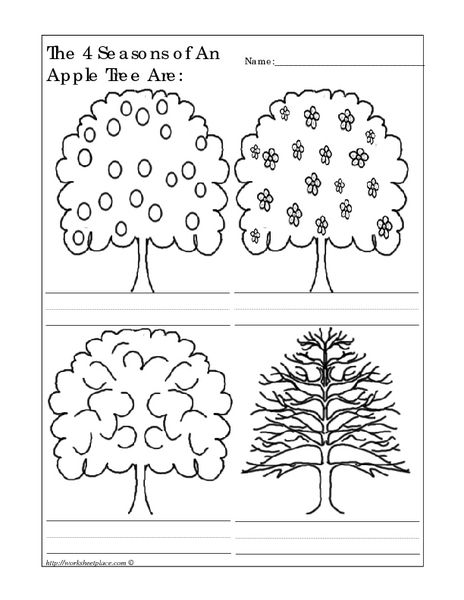 The 4 Seasons Of An Apple Tree Are  Worksheet