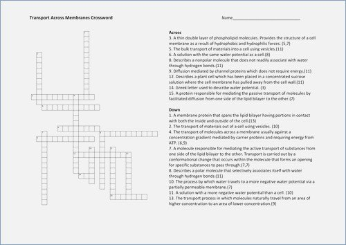Transport Across Membranes Powerpoint Worksheet Answers