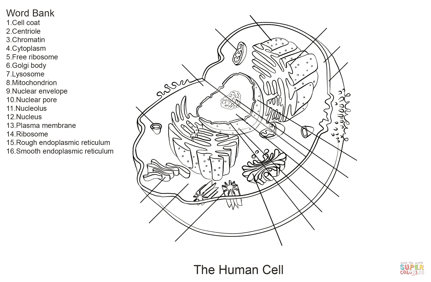 Anatomy Cell Worksheet The Best Worksheets Image Collection