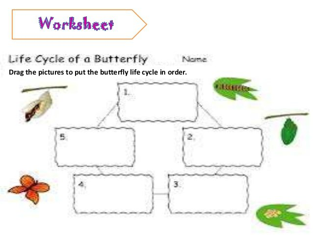 Animal Life Cycle Worksheet Worksheets For All