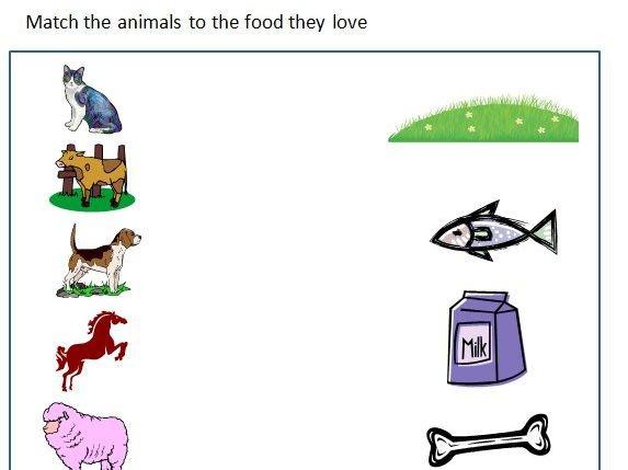 Animals And Their Food Worksheet By Ritureddi