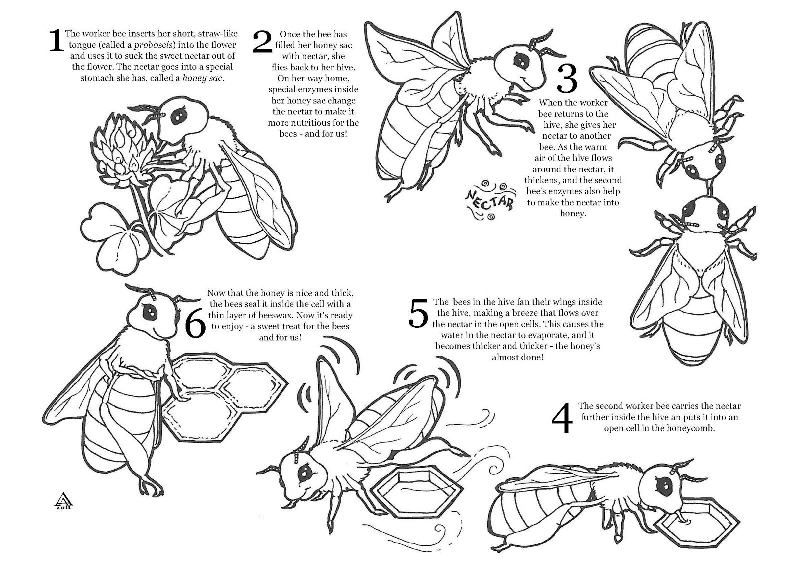 Bee Worksheets The Best Worksheets Image Collection