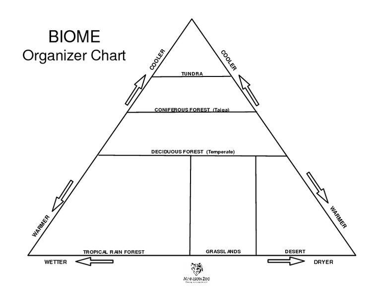 Biome Organizer Chart Worksheet