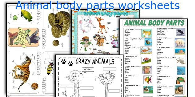 Body Parts Of Animals Worksheets Pdf